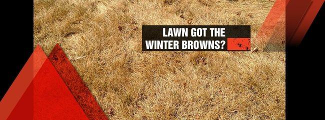 winter brown lawn