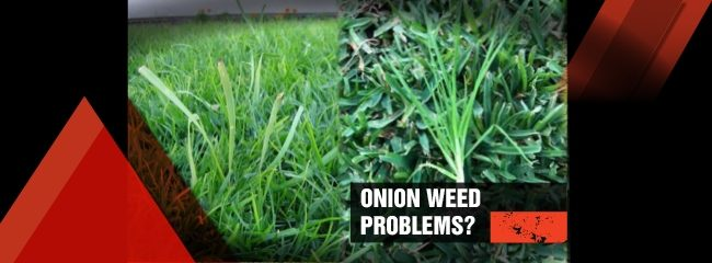 How to get rid of onion weeds